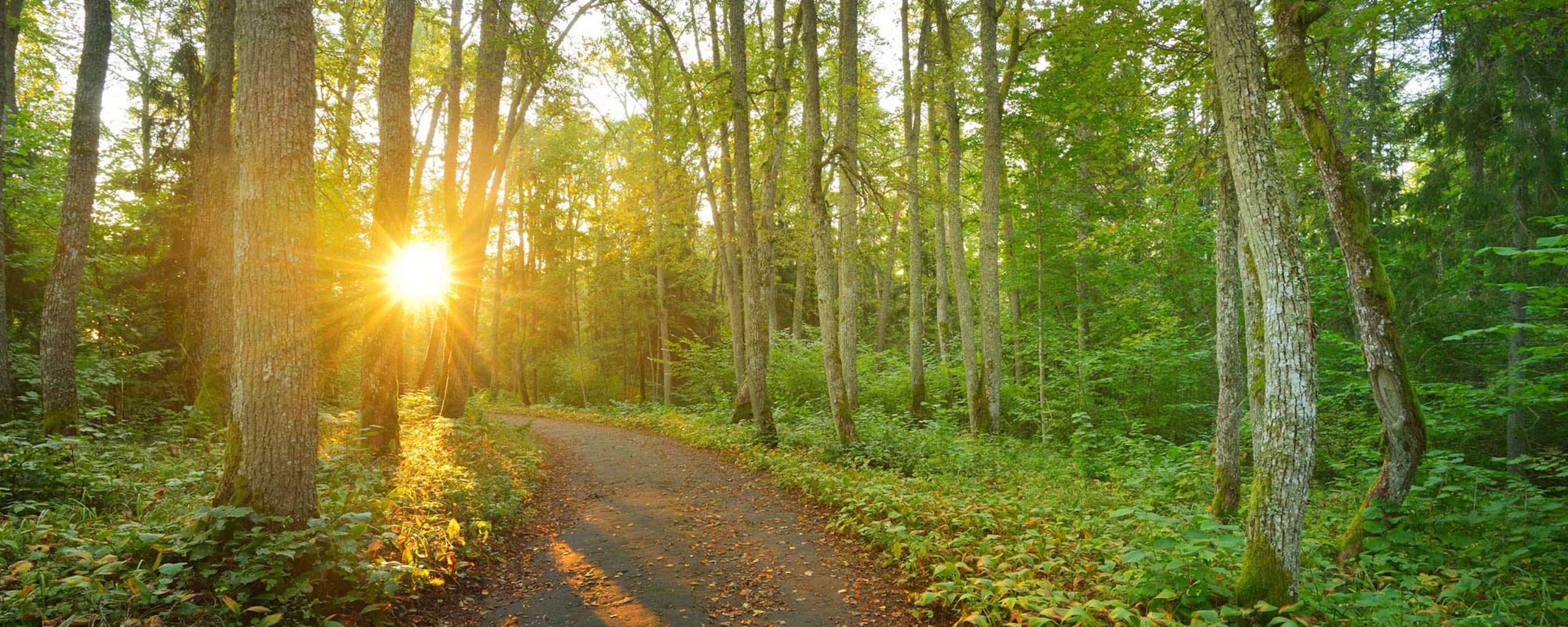 slider-woods-path-sm